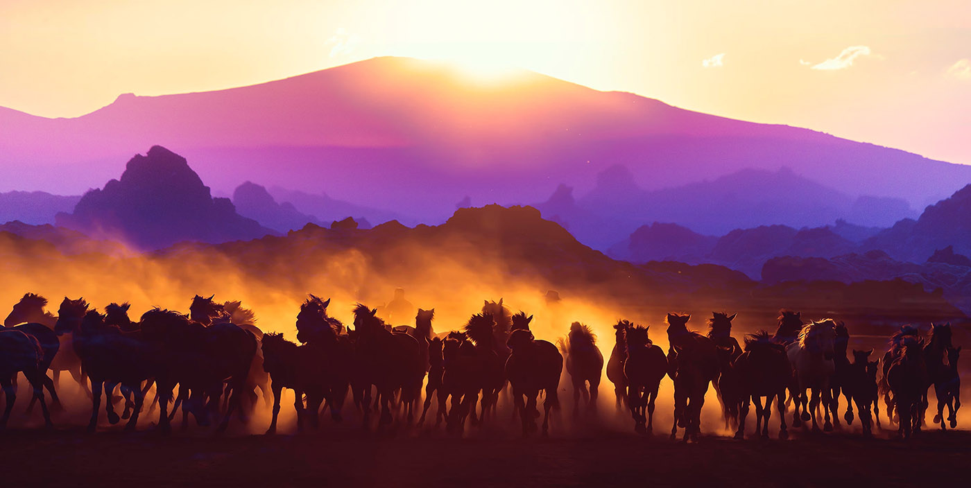 Group of Horses Running HD Photo Montage 03 - RF Stock Image