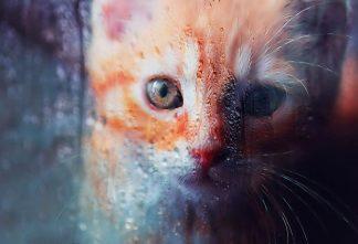 Sad Kity Cat Stock Photo